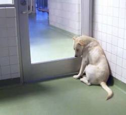 Dog waits for home at Dallas Animal Services